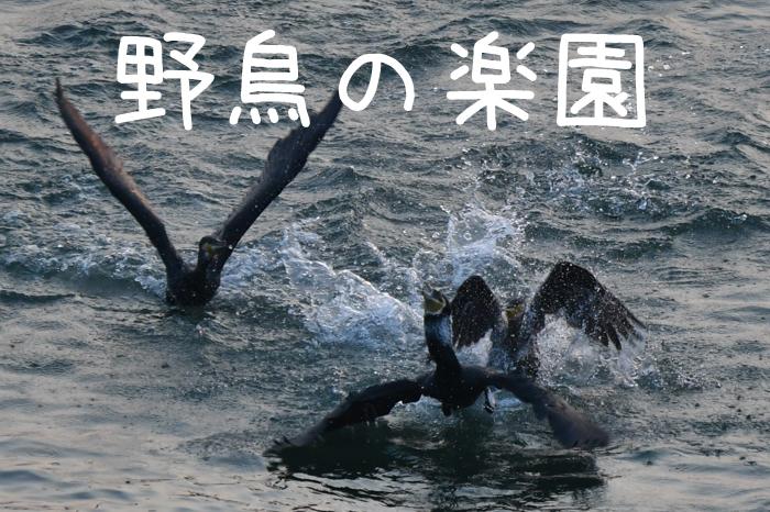野鳥の楽園、大淀川(^o^)_c0049299_22323555.jpg