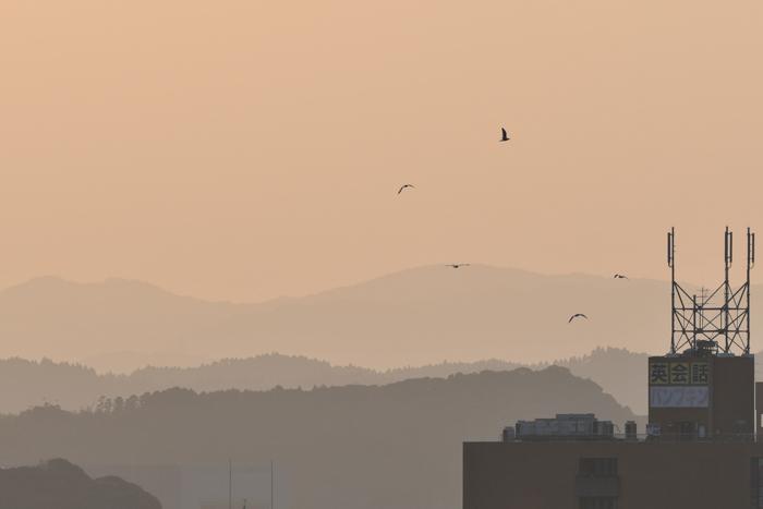 野鳥の楽園、大淀川(^o^)_c0049299_22500994.jpg