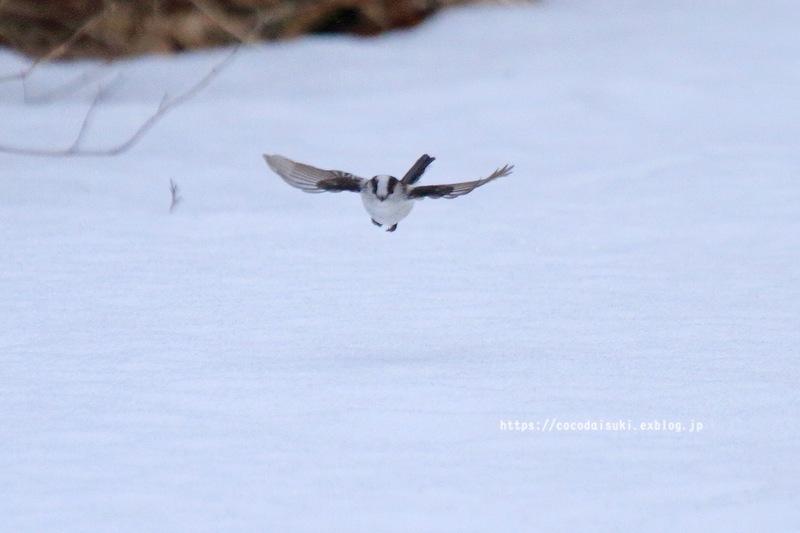 雪上のエナガ♪_d0367763_22142011.jpg