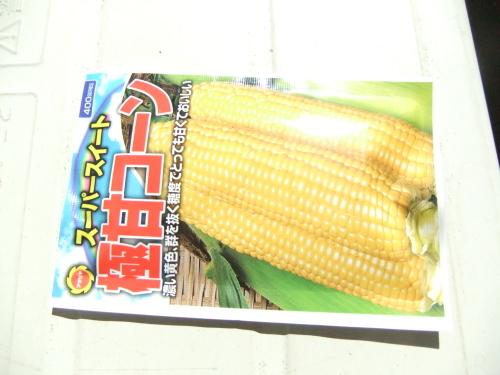トウモロコシのポット撒き_b0137932_10272724.jpg