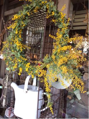 春の花♪ミモザ♪_d0058876_13023999.jpg