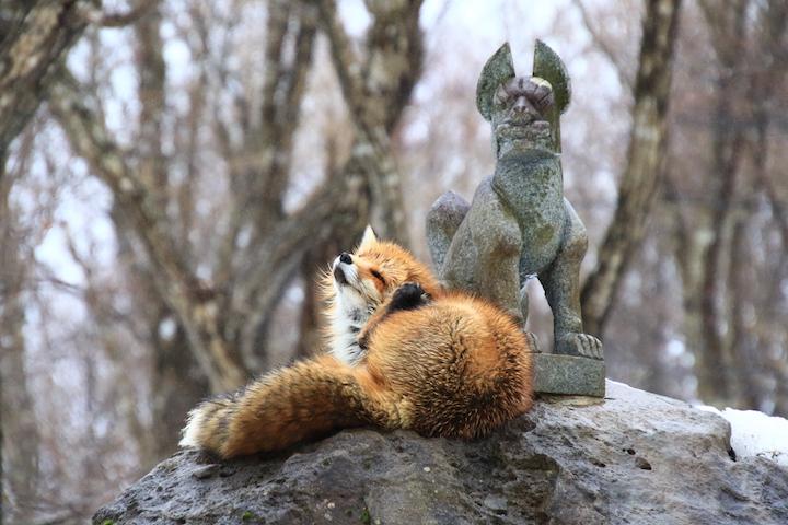 狐展望岩_b0016600_8514455.jpg