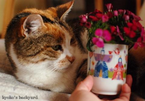 ひな祭りにお花を進呈_b0253205_03442194.jpg