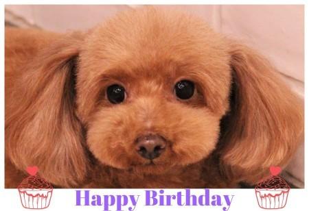 Happy Birthday ♡ ティアラちゃん_d0060413_13174146.jpg
