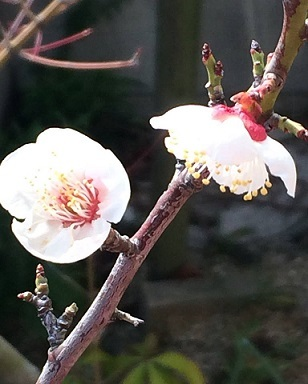 """春をみつけると嬉しくなりますー""""内から感じる喜び""""ー_f0206741_11402587.jpg"""