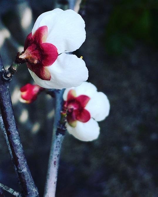 """春をみつけると嬉しくなりますー""""内から感じる喜び""""ー_f0206741_11482732.jpg"""