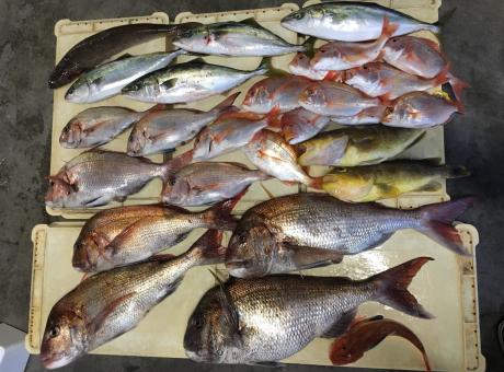 釣具のまるきん様とマリーナの釣果♪_a0077071_14314923.jpg