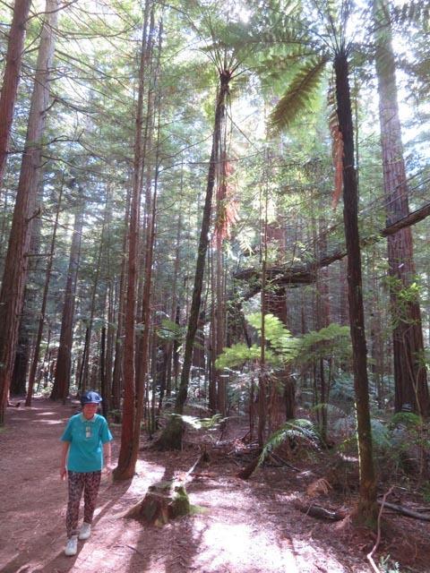 レッドウッドの森でこどもの日_e0133780_08395302.jpg