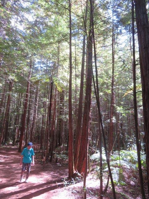 レッドウッドの森でこどもの日_e0133780_08402661.jpg