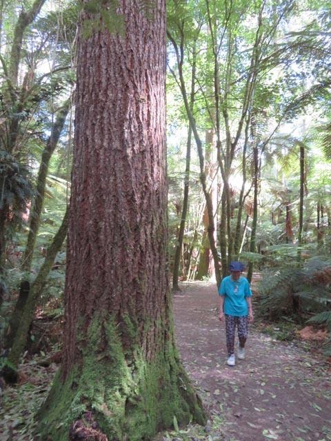 レッドウッドの森でこどもの日_e0133780_08412097.jpg