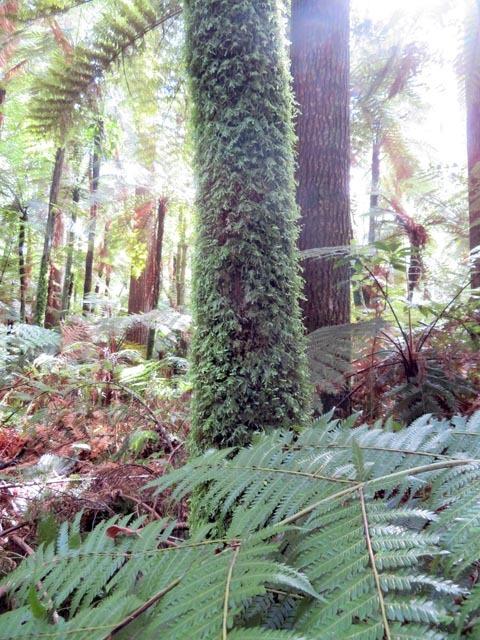 レッドウッドの森でこどもの日_e0133780_08440859.jpg