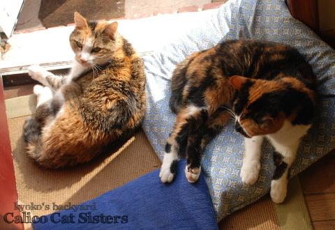 仲良くひなたぼっこする姉妹猫_b0253205_06084177.jpg