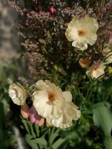 花盛りチャコ_e0285305_12355682.jpg