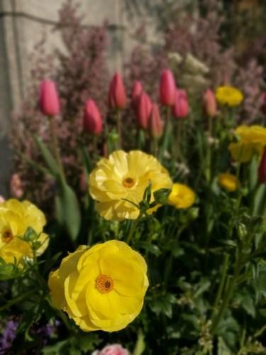 花盛りチャコ_e0285305_12355738.jpg