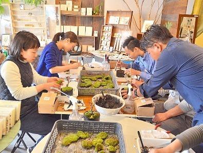 桜盆栽展 vol.6 はじまりますー_d0263815_16170059.jpg
