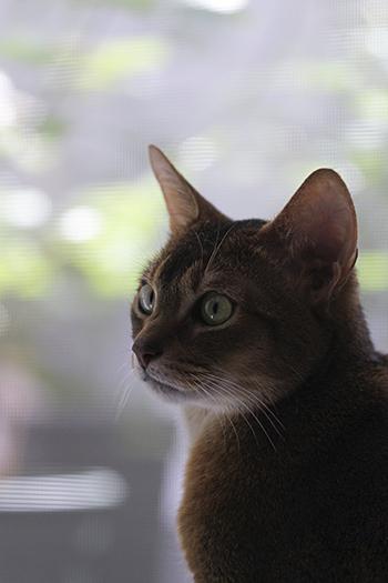 [猫的]やっぱり窓が好き_e0090124_00215703.jpg