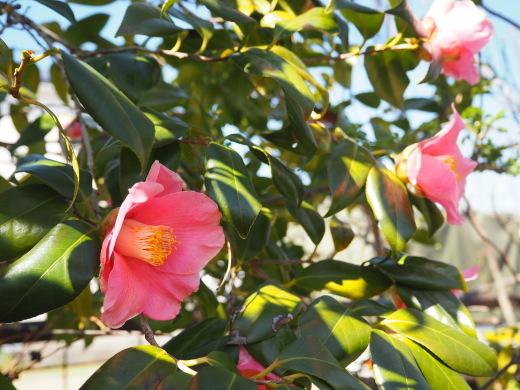 ガーデンに春が来ました!_f0139333_23261333.jpg