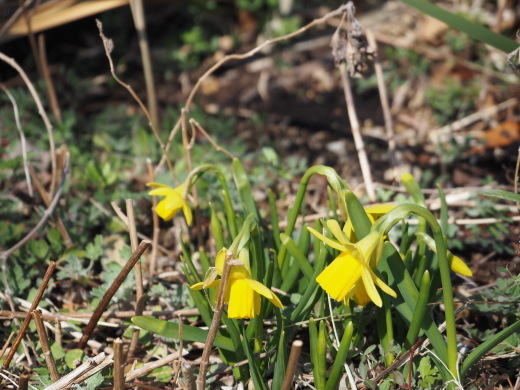 ガーデンに春が来ました!_f0139333_23264506.jpg