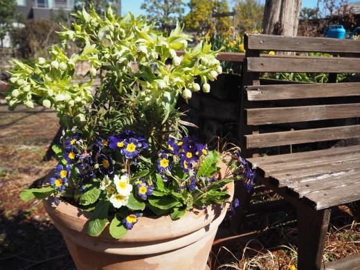 ガーデンに春が来ました!_f0139333_23273504.jpg