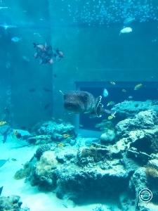 沖縄2 美ら海水族館_a0059035_12190495.jpg