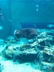 沖縄2 美ら海水族館_a0059035_12190783.jpg