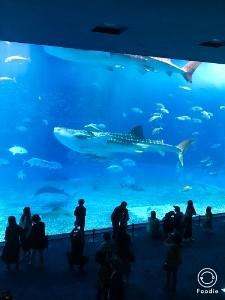 沖縄2 美ら海水族館_a0059035_12190911.jpg