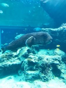 沖縄2 美ら海水族館_a0059035_12272442.jpg