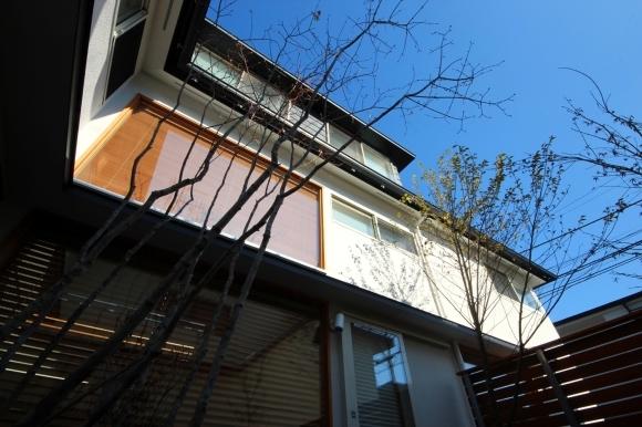 和泉の家 植栽_c0310571_09153642.jpg