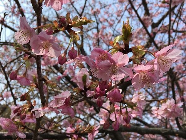 一足お先に春♪_b0100229_11325993.jpg