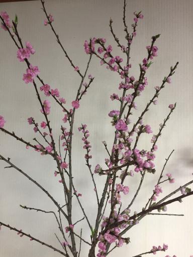 桃とモモ_c0223630_22230642.jpg