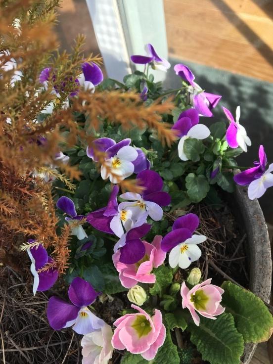 庭のあちこちで春の芽吹き_c0274374_09515584.jpeg