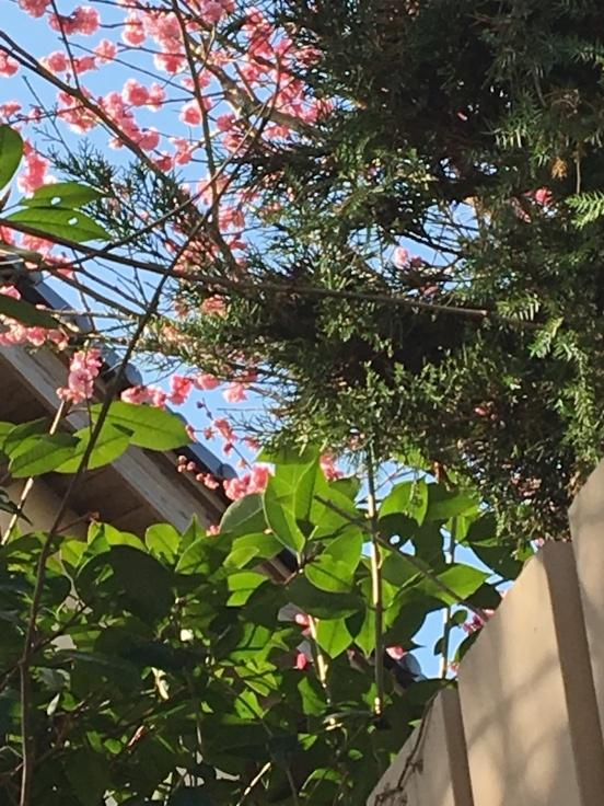 庭のあちこちで春の芽吹き_c0274374_09523989.jpeg