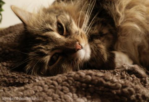 Baileyのいびき(猫ビデオ)_b0253205_07522888.jpg