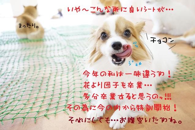 d0220513_16291189.jpg