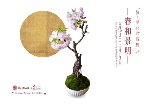 桜盆栽展 vol.6 はじまりますー_d0263815_13160476.jpg