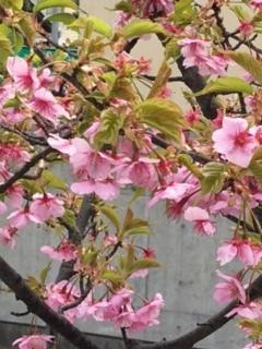♡3月のお知らせ♡_e0131324_13265901.jpg