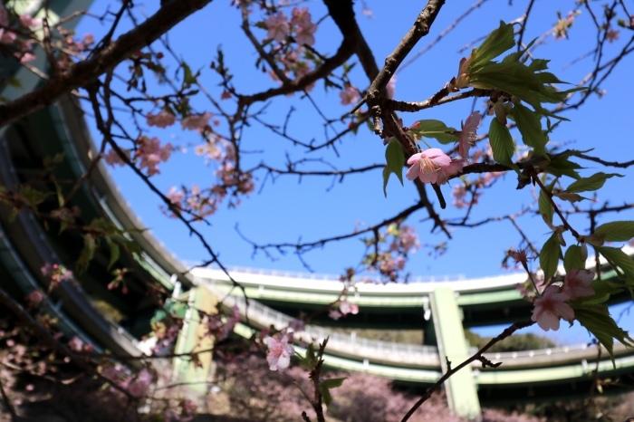 【ループ橋/伊豆スカイライン】_f0348831_05552842.jpg