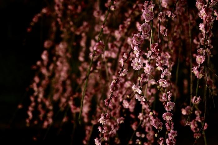 【大倉山公園】_f0348831_23382315.jpg