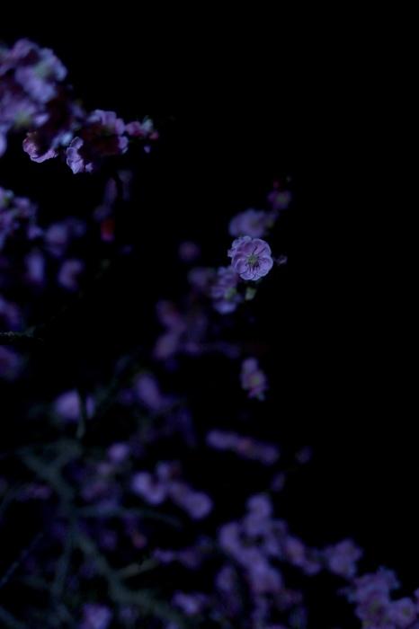 【大倉山公園】_f0348831_23382444.jpg