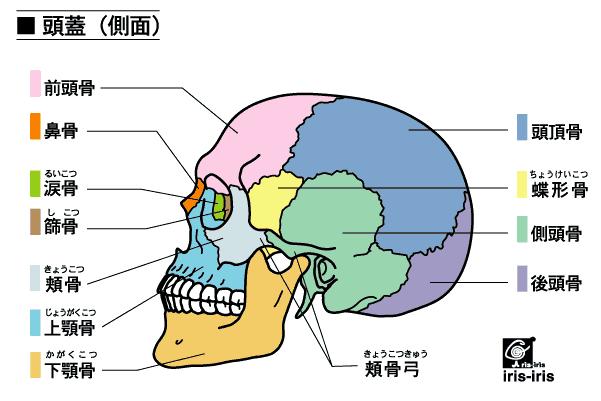 マスクが耳からはずれやすい人は花粉症になりやすい? 〜ある日の施術より〜_e0073240_09132160.jpg