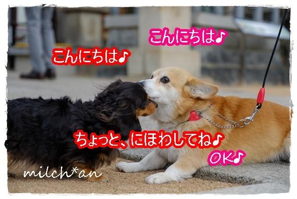 b0115642_20123864.jpg