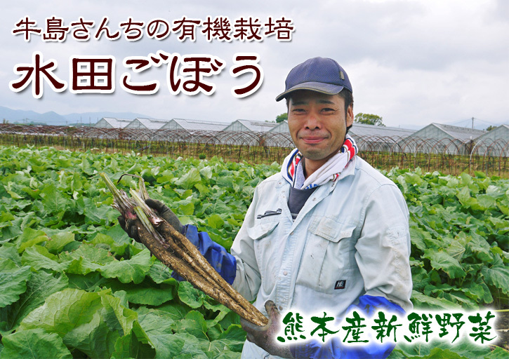 有機栽培の水田ごぼう 元気に成長中!今年はあまりの寒さに少し遅れ、5月中旬より出荷予定!!_a0254656_16061520.jpg