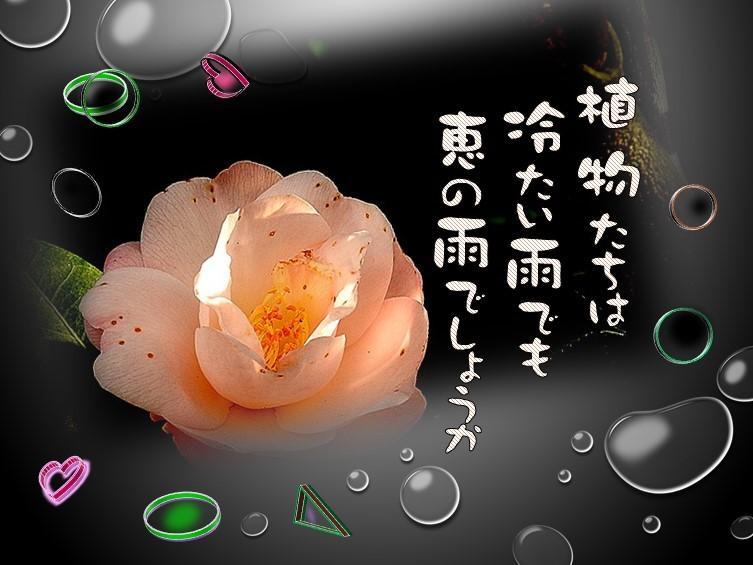 f0214467_09572657.jpg