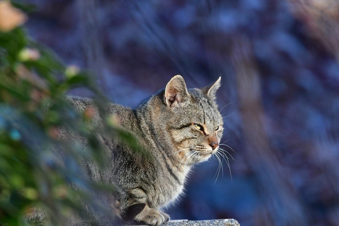 仲良し? セキレイと猫ちゃん_f0053272_12363866.jpg