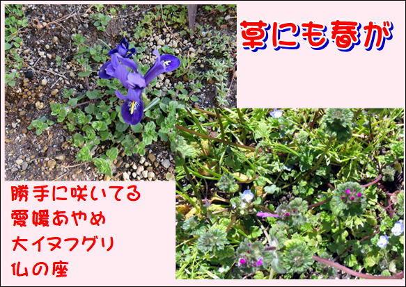 f0003174_13250914.jpg