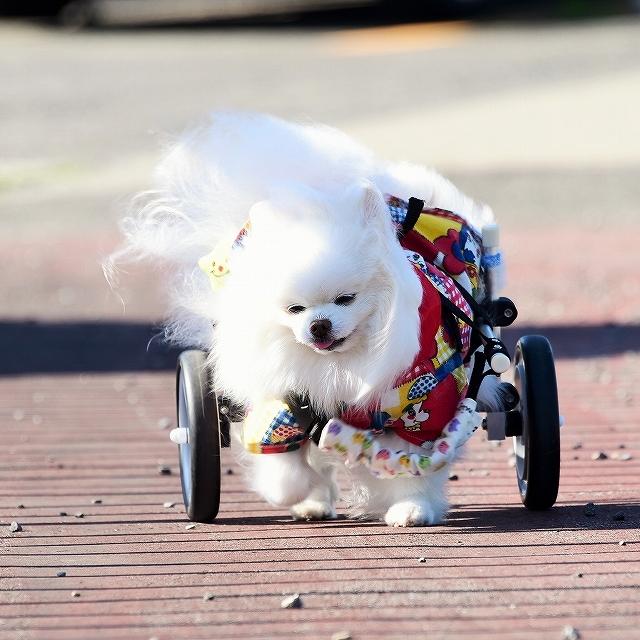 病院での会話・シニア犬あるある_d0360206_02133590.jpg