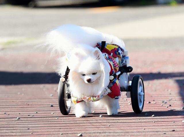 病院での会話・シニア犬あるある_d0360206_02134050.jpg