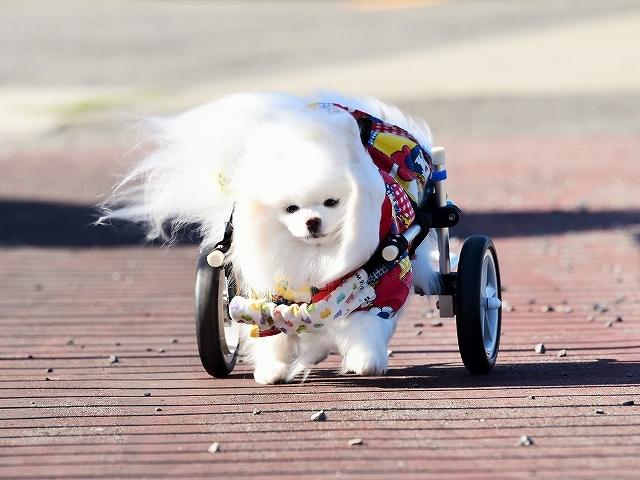 病院での会話・シニア犬あるある_d0360206_02134680.jpg