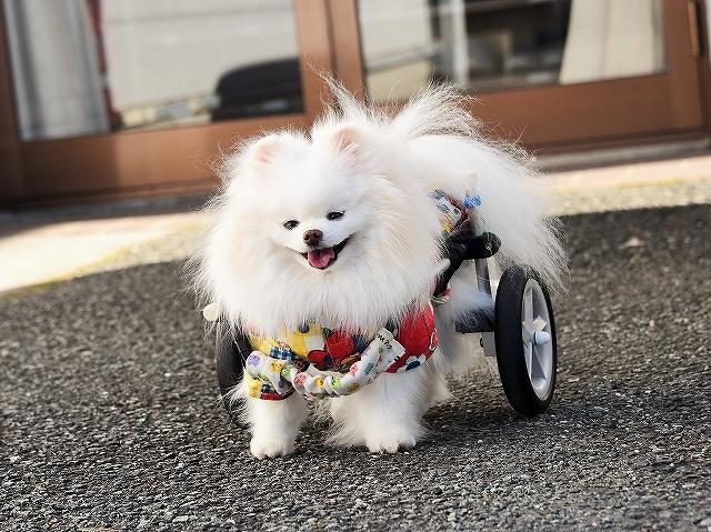 病院での会話・シニア犬あるある_d0360206_02135853.jpg
