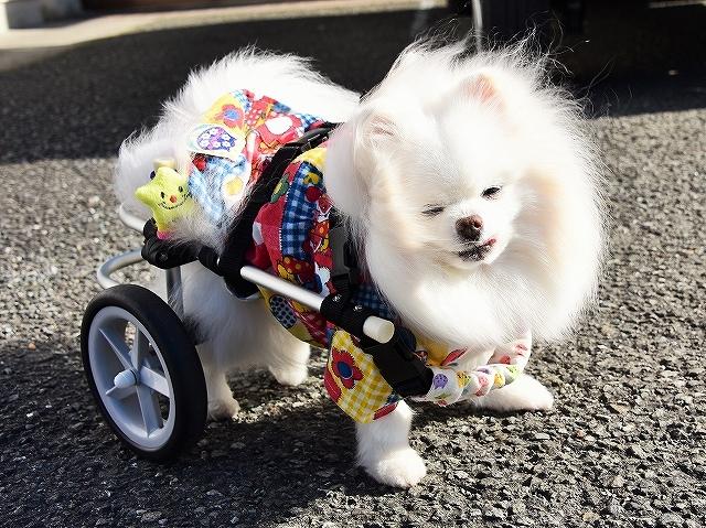 病院での会話・シニア犬あるある_d0360206_02140627.jpg
